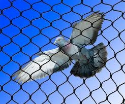 A bird flying over bird netting.